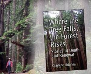 Where the Tree Falls