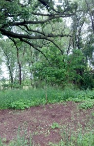 Prairie Oaks grave site